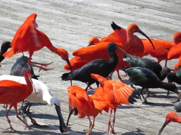 Final coloré lors du spectacle aux oiseaux